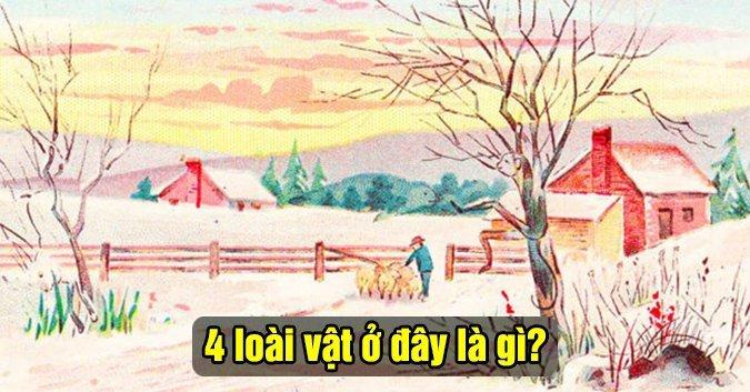 tim-4-loai-vat