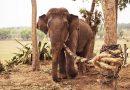 Sợi dây thừng trói chân voi và bài học cho những ai muốn vượt qua thất bại!
