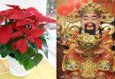 Chơi hoa TẾT hợp tuổi 12 con giáp cho TÀI LỘC, vàng bạc đến đầy nhà
