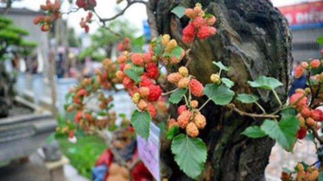 Những loại cây KHÔNG NÊN TRỒNG trước cửa nhà để tránh gặp họa